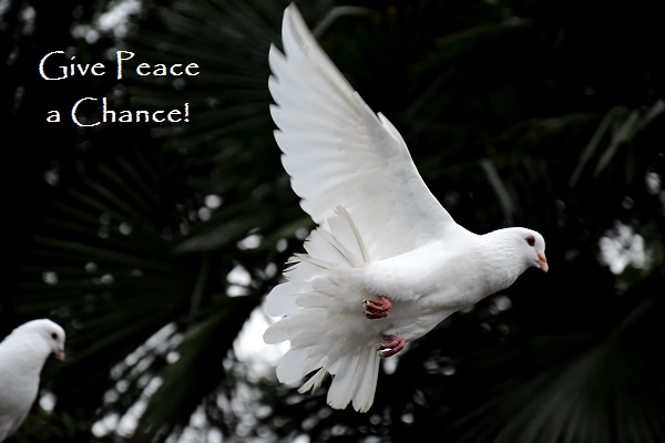 Give Peace a Chance!