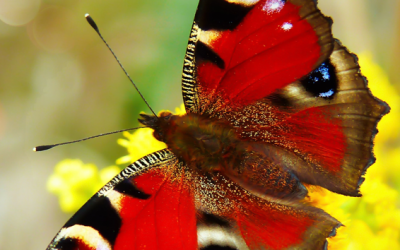 Butterflies are Beautiful!